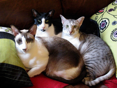My little family cram onto the small sofa to be near me while I work