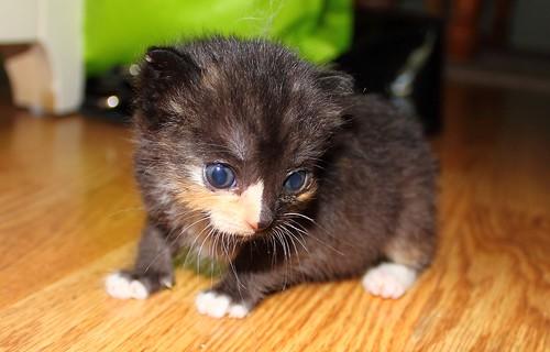 20120616_Kitten_621