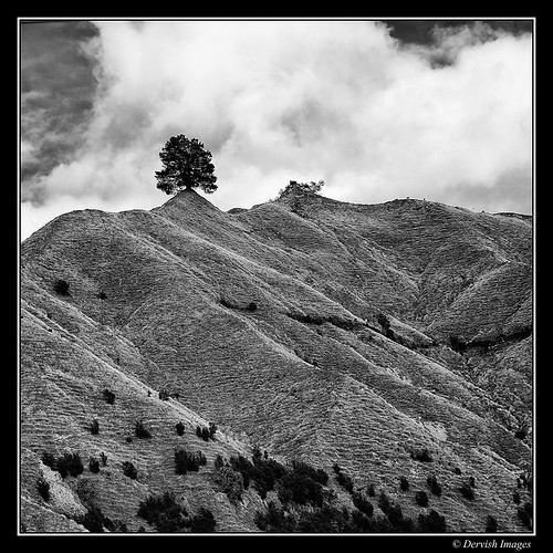 Tree on a hill by Dervish Images