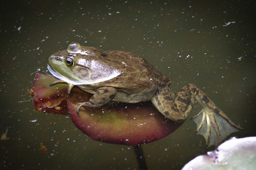a bit too heavy for the lilypad