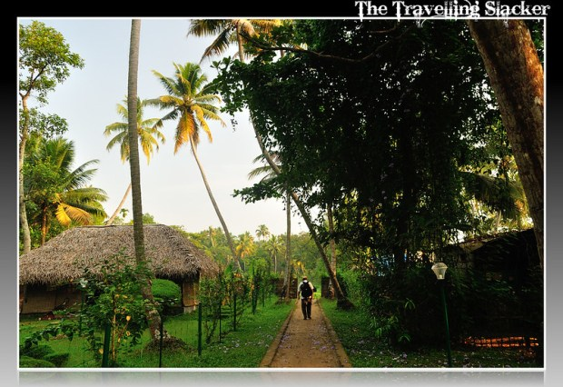 Alleppey (3)
