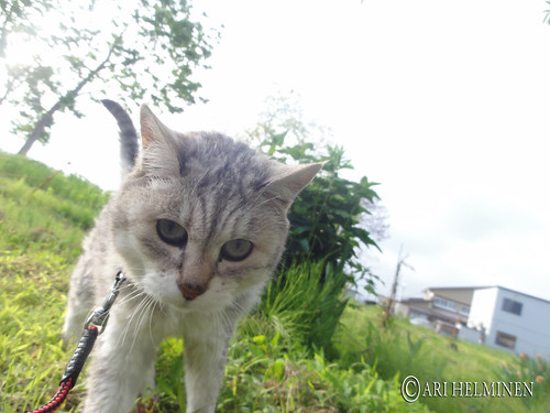 Journey of Chibi ちびちゃん!