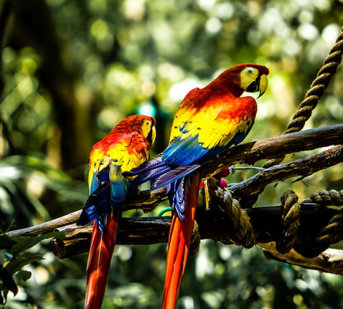 Do you want parrots or people in your contact center? by Myra Golden