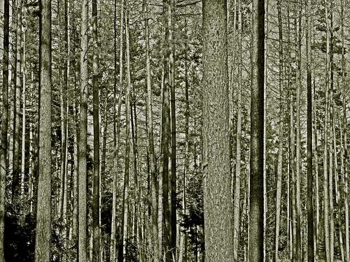 forest near Kalreuth, Franconia