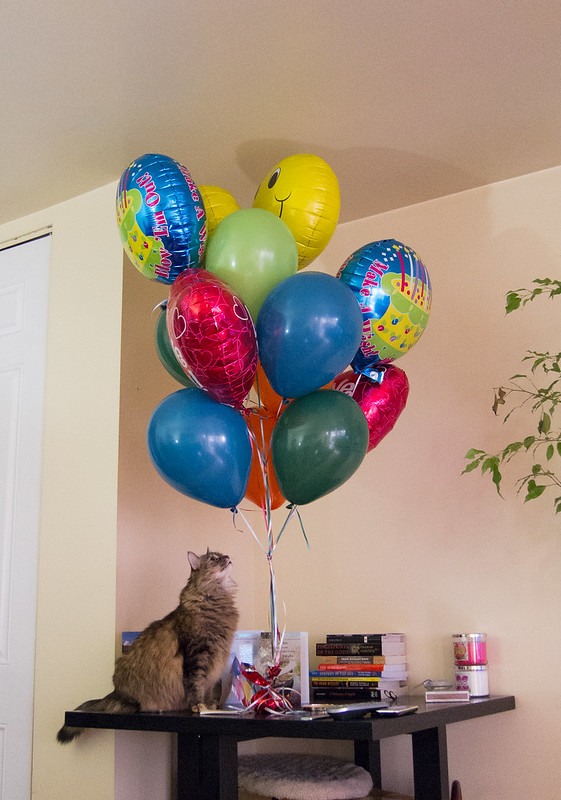 I can has balloons?