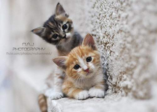 Two cats - M.A.J photography - 無料写真検索fotoq