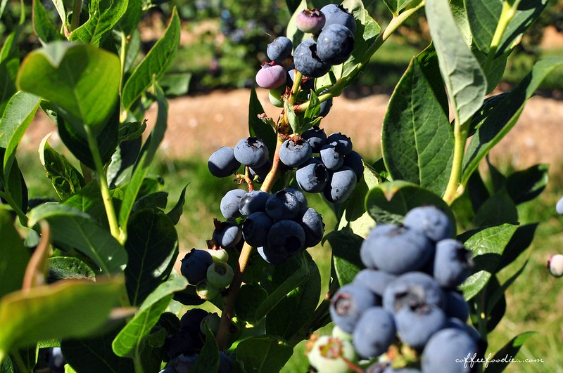 Emma Lea Farms Delta BC 00008