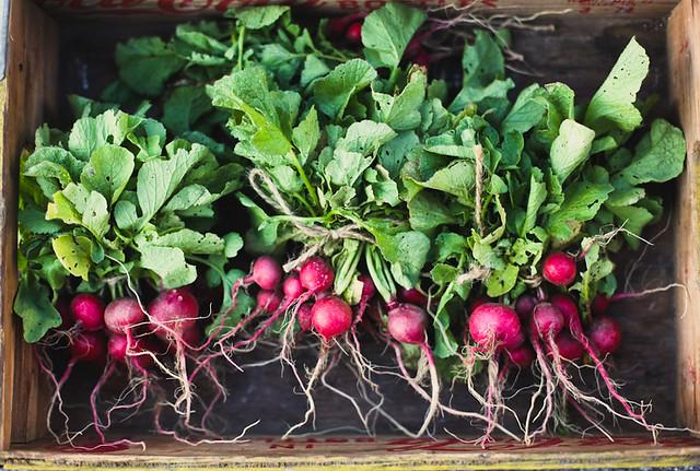 farmers market radishes