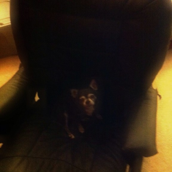 Cammie in the chair