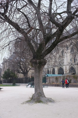 notre-dame in a cold day