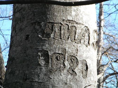 Gravat en un arbre de Sauva Negra