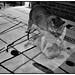 Ghost Cat Mayhem, March 29, 2012