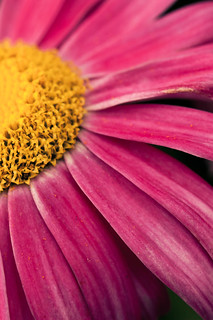 pink and yellow 3