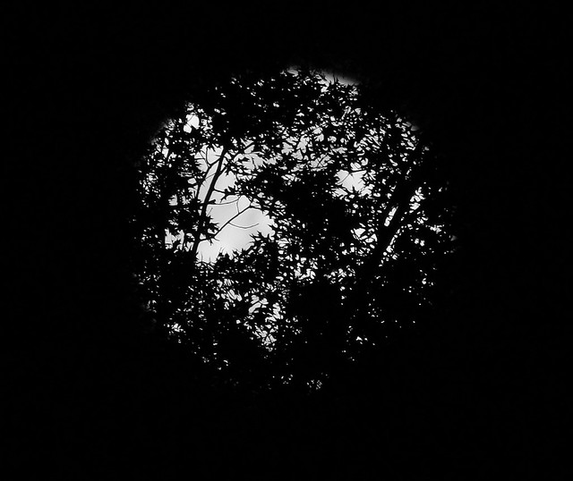 Full Moon through the trees 6/4/12
