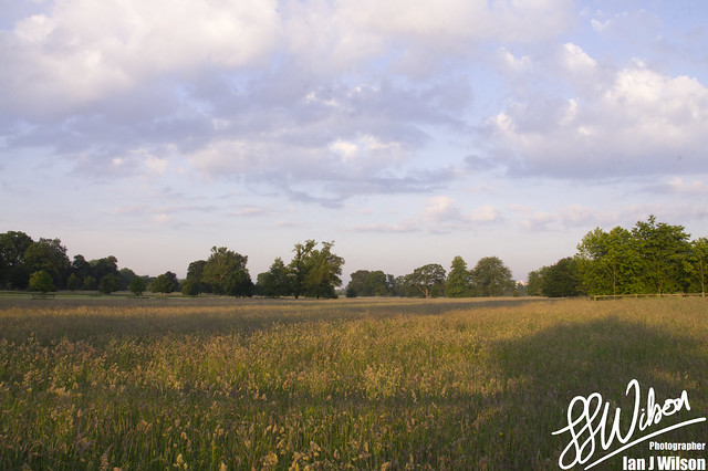 Meadow at Dawn – Daily Photo (17th July 2012)