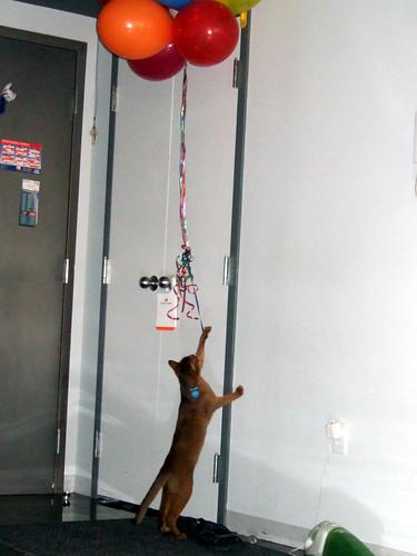 gunhee-balloons633