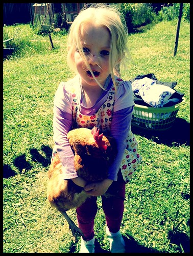 Alice and chicken