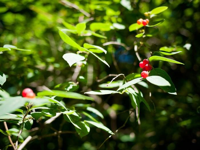 Arnold Arboretum 3