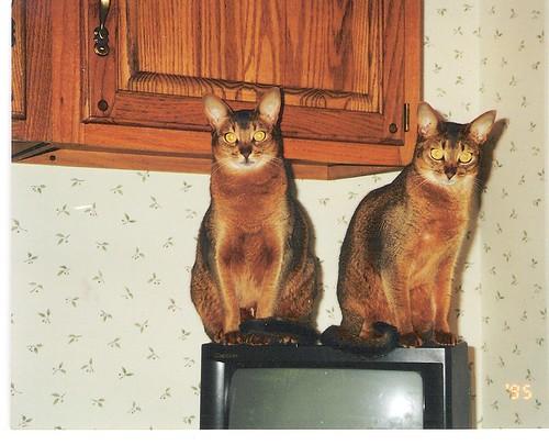 Cleo and Sara