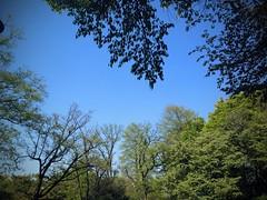 初夏のようなスッキリした空
