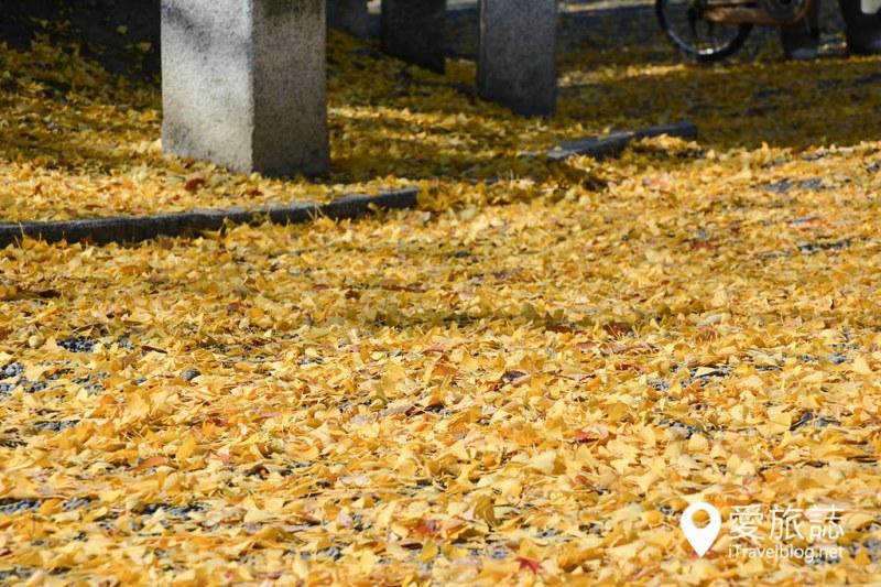 《京都赏枫景点》京都御所无料导览活动:限定日期公开,记得事前上网预约免费参观行程