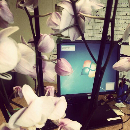Orchids and laptop