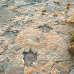 Dinosaur Tracks at Clayton Lake State Park