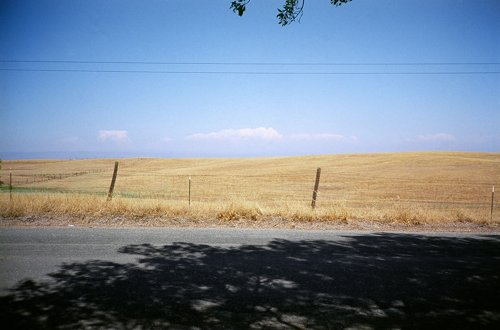 Corning, CA. 2011.