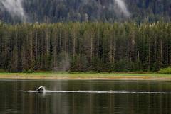Whale- Juneau 2552 cu