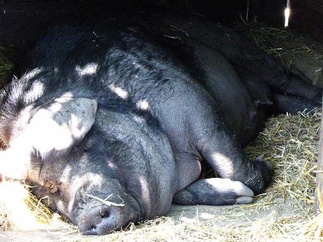 Mommy Pig Takes A Nap