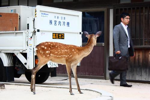 Deer & Japanese people - #1
