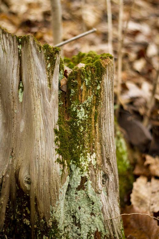 Mossy Stump