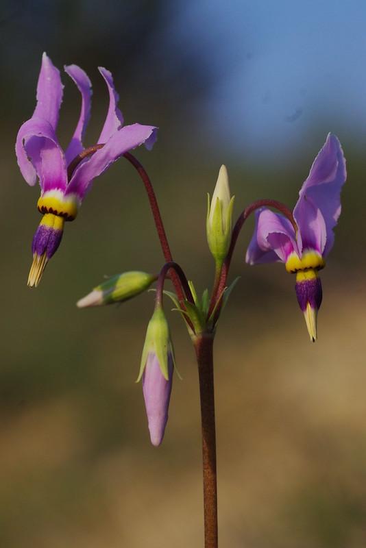 Texas Spring Flora