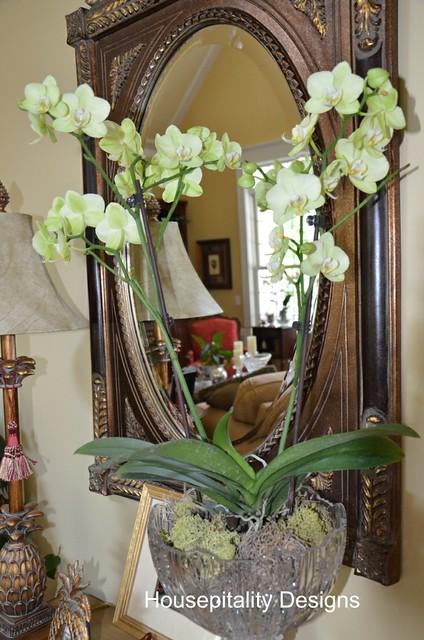 Trader Joe's Orchids Price : trader, joe's, orchids, price, TRADER, JOE'S, ORCHIDS