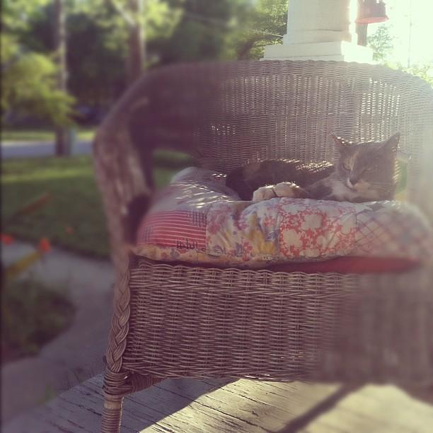porch kitty.