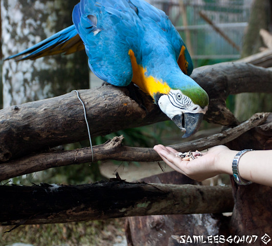 20120407 2012.04.06 Bird Paradise & Wildlfe Park @ Langkawi-5