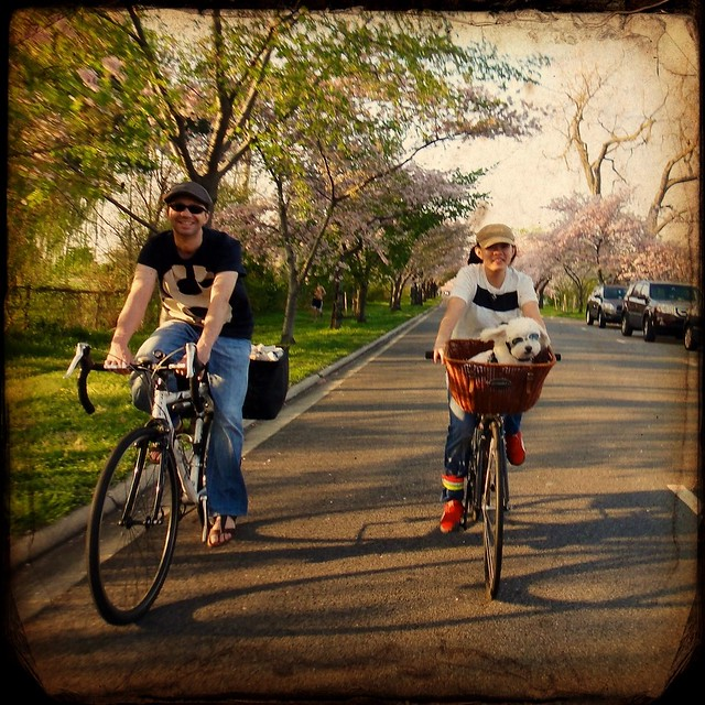 One more shot of the #bikeDC couple and their puppy in a basket. With goggles.