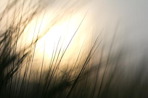 sunlight in the fields