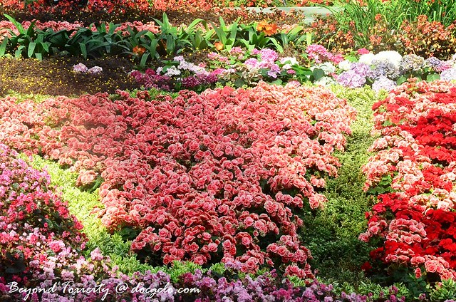 bed of flowers # 2, gardens by the bay, singapore