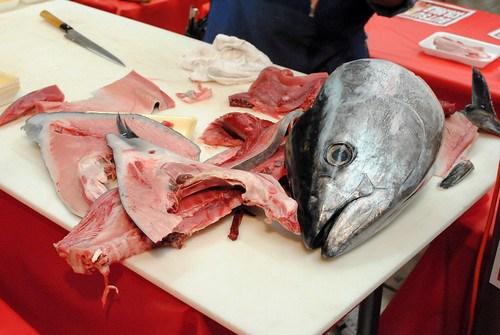 tuna remains