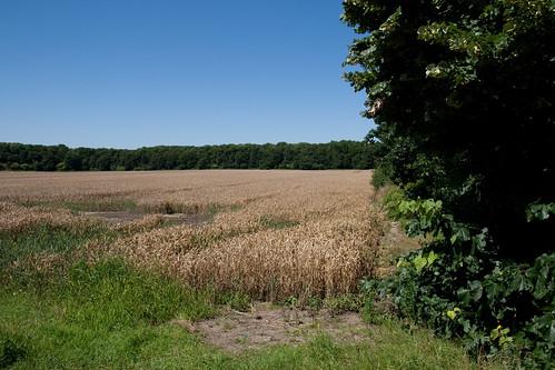 An Feldern entlang der Neusser Landstraße