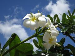 USA_2012_01_Hawaii_10