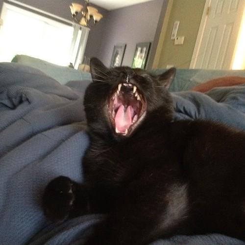 visciously yawned at by eteckard