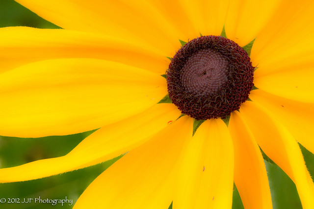 2012_Jul_03_Yellow Flower_003