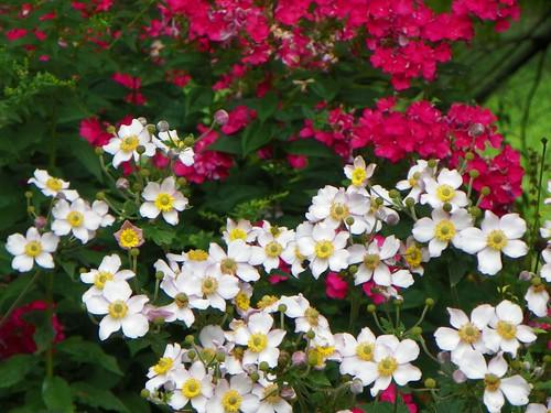 bloom11