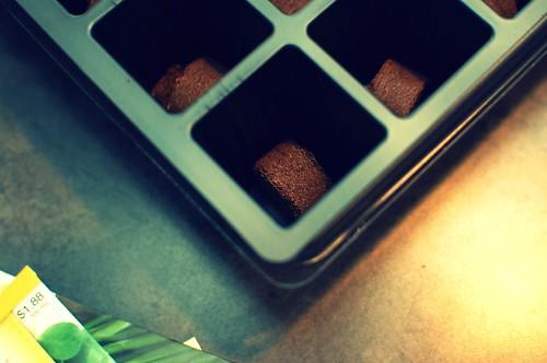 Seed Cell w. Soil Pod