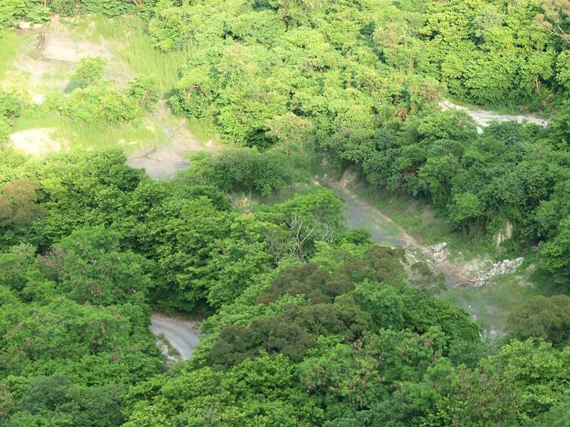 6月30日上山走走—尋找柴山雨後的蘭蹤 @ 朵蕊蜜濕地生態園區 :: 痞客邦