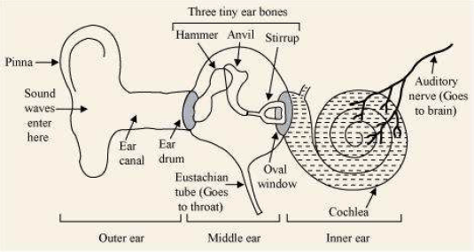 NCERT Solutions for Class 9th Science: Chapter 12 Sound ...