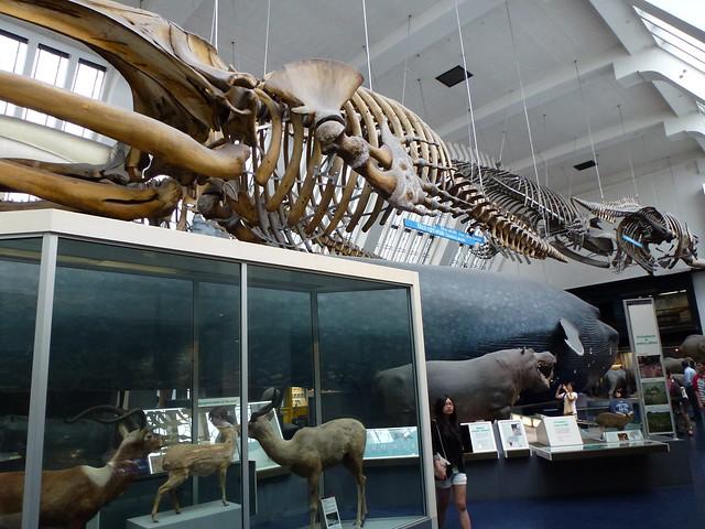 Natural History Museum London Mammals Hall