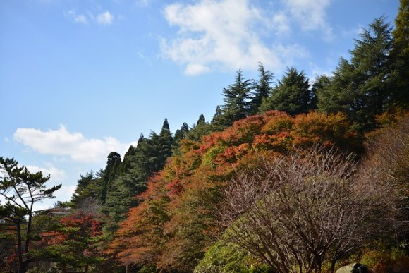 121103_coloredleaves03